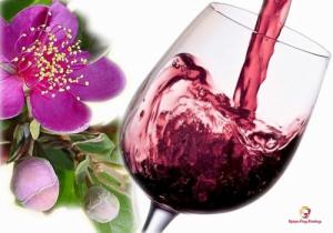 Cách ngâm rượu Sim rừng thơm ngon đơn giản tại nhà